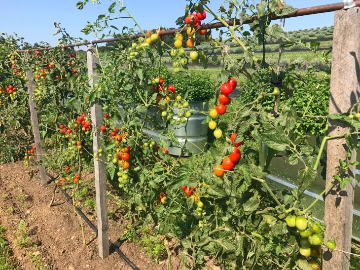 Sun Dried Tomato Risotto